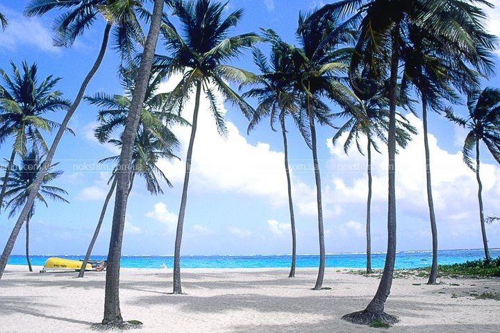 Ямайка 38500 руб чел